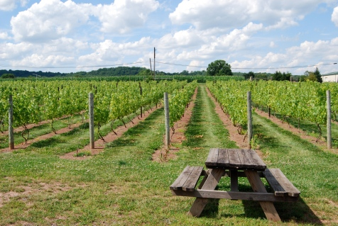 Hopewell Valley Vineyard