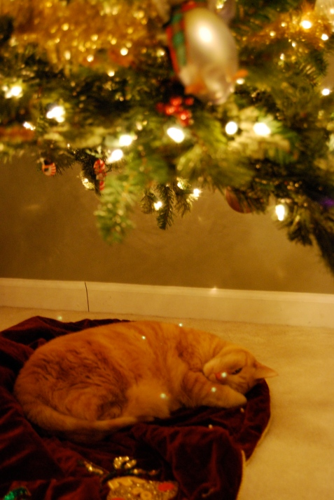 Josie under the Christmas tree