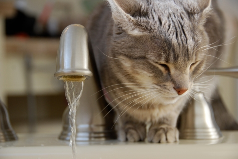 Cat snubbing faucet